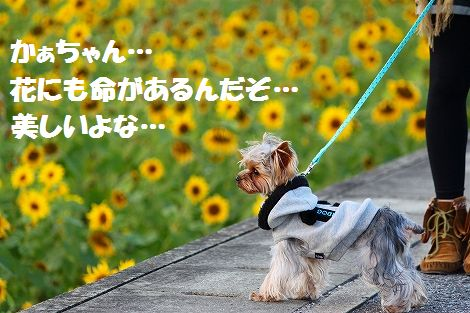 s-IMG_0020-1.jpg