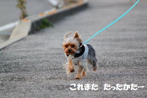 s-IMG_0044.jpg