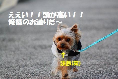 s-IMG_0045.jpg