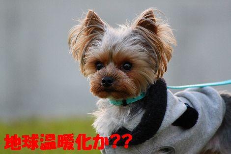 s-IMG_0059.jpg