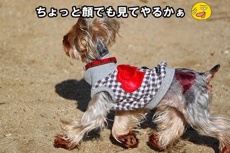 s-IMG_0872.jpg