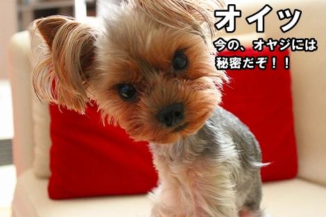 s-IMG_0998.jpg