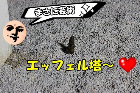 s-IMG_1529.jpg