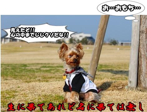 s-IMG_2051.jpg
