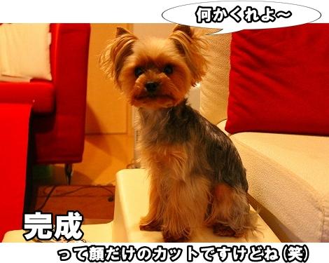 s-IMG_2244.jpg