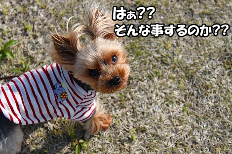 s-IMG_3135.jpg
