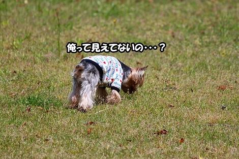 s-IMG_3253.jpg