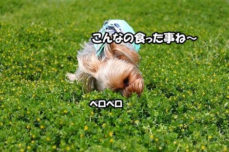 s-IMG_3483.jpg