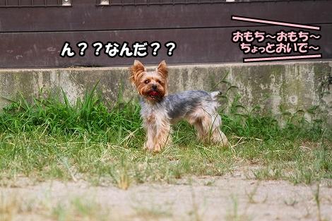 s-IMG_4497.jpg