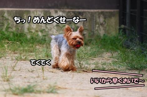 s-IMG_4498.jpg