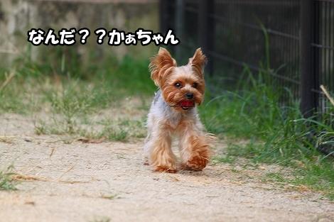 s-IMG_4499.jpg