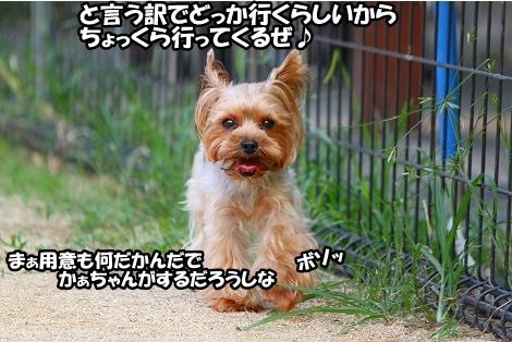 s-IMG_4501.jpg