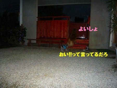 s-P1020794.jpg