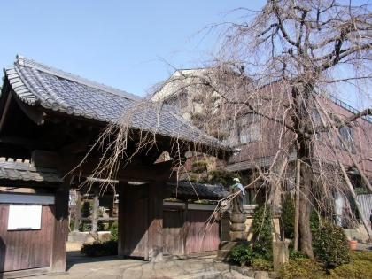 小豆澤神社となり桜