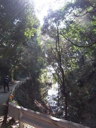 畑林道 河