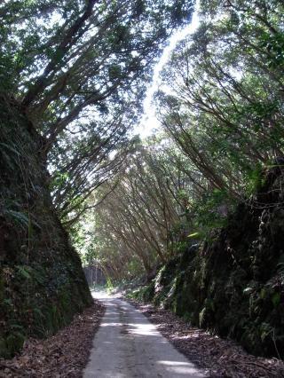 畑林道 木のトンネル