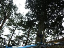 正体不明の木