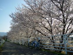 最後に家の近所の桜をパチリ