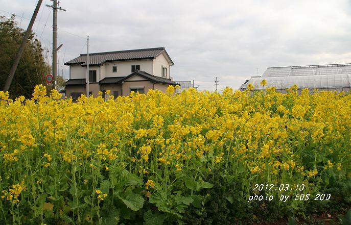 IMG_8578-1.jpg