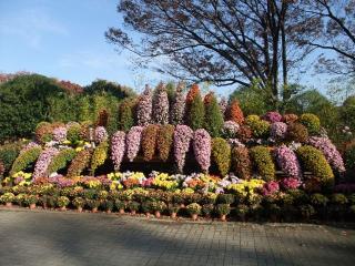 神代植物公園 11月