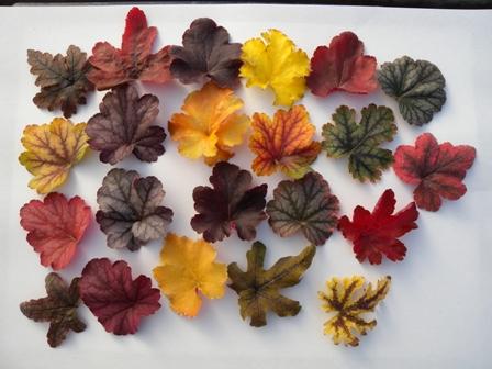 1月8日ヒューケラ冬の葉色