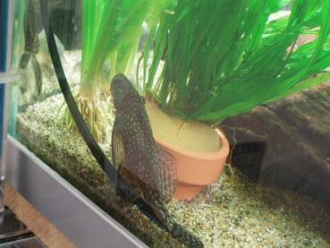 ミクロの植木鉢