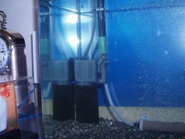 コメ水槽水中ポンプ化01