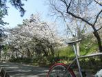20100403須磨浦公園桜1
