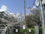20100403 夙川