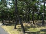20100912松林