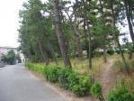 20100920中崎の松林