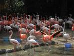 20101011王子動物園フラミンゴ