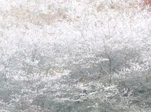 四季桜8P1040124
