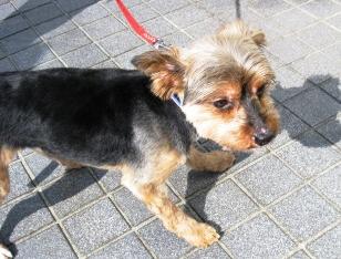 小型犬Mix