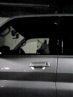 お父さん犬ソックリその1