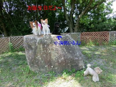 CIMG8866.jpg