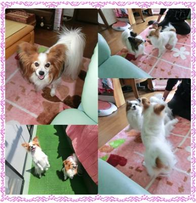cats_20110511154807.jpg