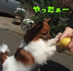 DSCF6339.jpg