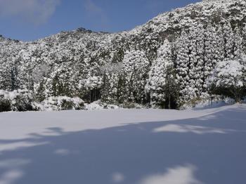 大雪2010年 313