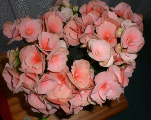 flower100519