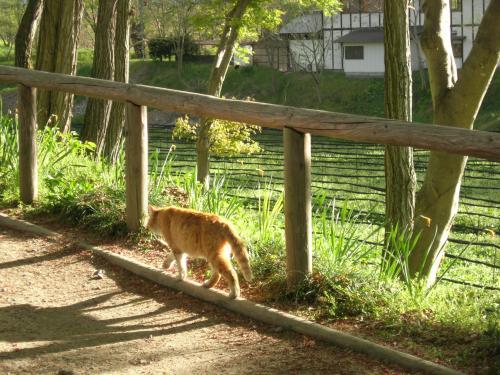 わさび畑のネコ