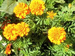 オレンジ250