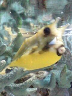 泥棒魚2-0001