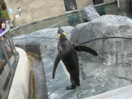 外のペンギン2