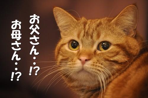 001_20120320144230.jpg