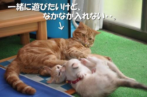 002_20110701142934.jpg