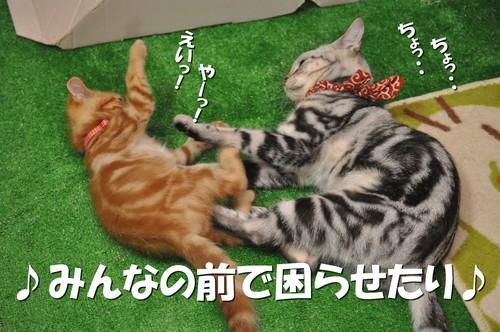 002_20120107195836.jpg