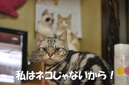 003_20120313132354.jpg