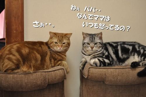004_20120309143946.jpg