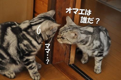006_20111109131216.jpg